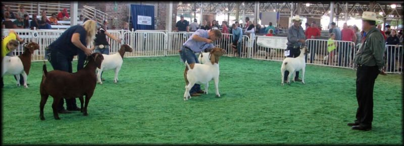 Trickman Rick with Newton Farms Sealed With A Kiss won the 12-16 Month Class!